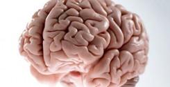 mozak-organ21122016