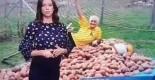 špirić krumpir 18092017